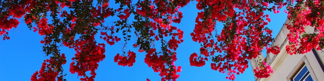 flowers-banner